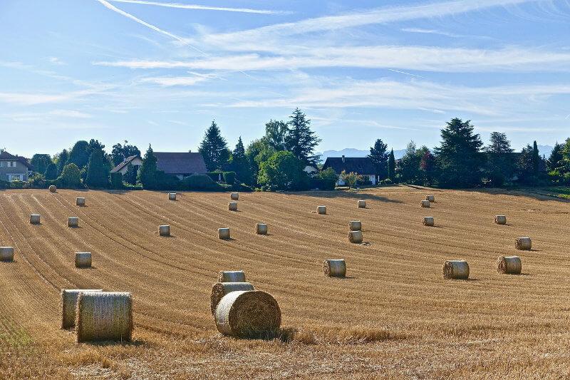 Bando ISMEA per startup agricole