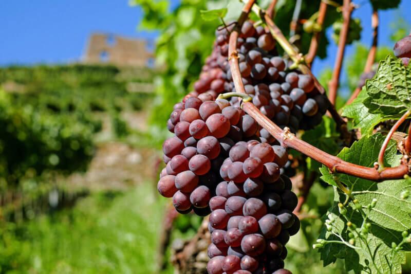 Come aprire una azienda vinicola