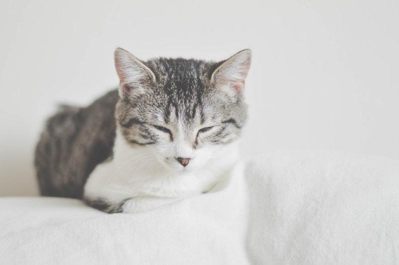 Aprire un gattile