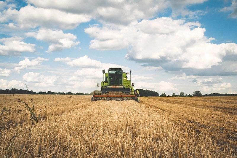 Bando Ismea per giovani imprenditori agricoli